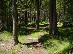 wooded trail 255 175